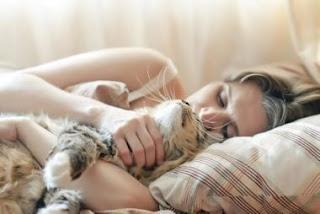 ¿Es bueno dormir con gatos en la cama por la noche?