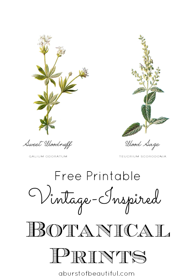 Free Vintage Inspired Botanical Printables - Nick + Alicia