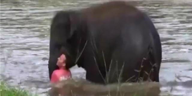 डूबते हुए शख्स को बचाने के लिए भागा हाथी का बच्चा, समझदारी देख लोग हो रहे 'इमोशनल'
