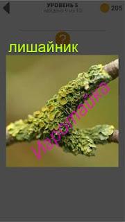 на дереве растет лишайник 5 уровень 400+ слов 2