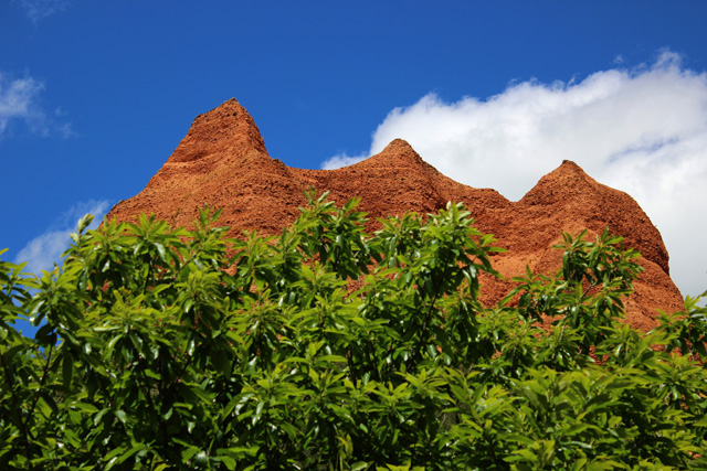 Picos de arenas rojizas, tras la vegetación