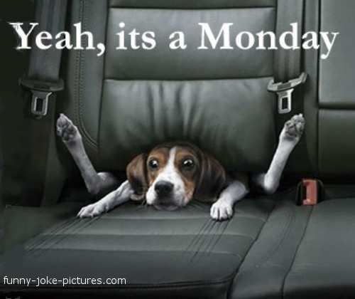 Hilarious Monday Blues Dog Joke Meme Image