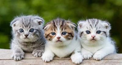 14 Tips Cara Merawat Bayi Kucing 3 Bulan Tanpa Ibunya