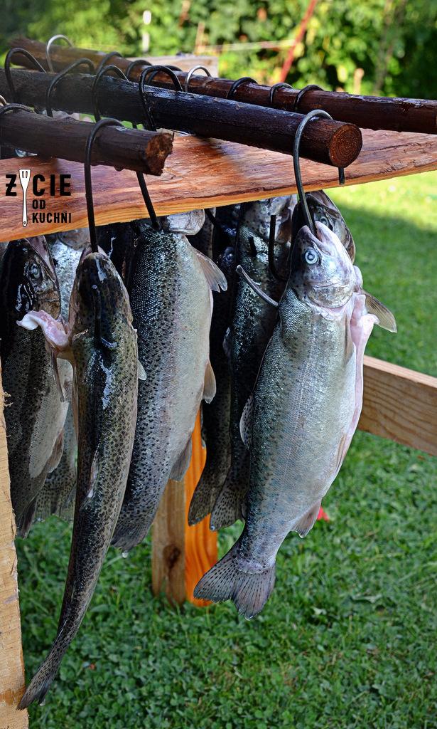 pstragi, suszenie pstragow, karp wedzony, jak wedzic karpia, wedzenie pstraga, wedzenie karpia, wedzenie makreli, domowe wedzenie, jak wedzic ryby, sposoby wedzenia ryb, nasalanie wedzonych ryb, solenie na sucho, solenie na mokro, blog kulinarny, zycie od kuchni, blog zycie od kuchni