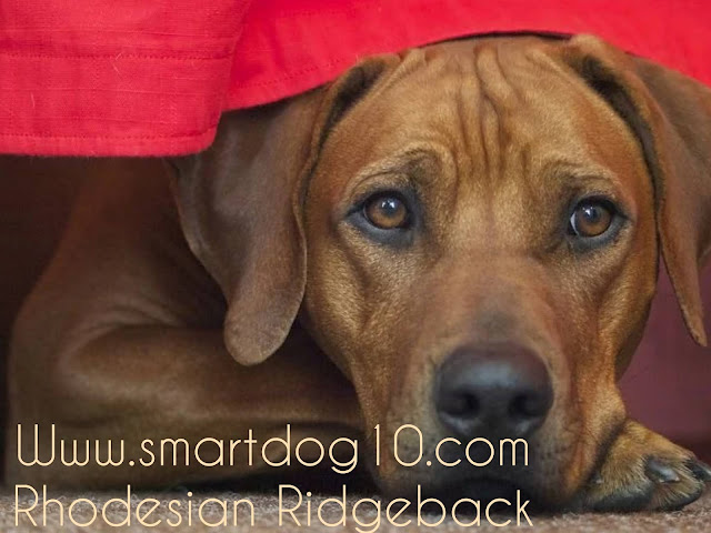 rodezya ridgeback
