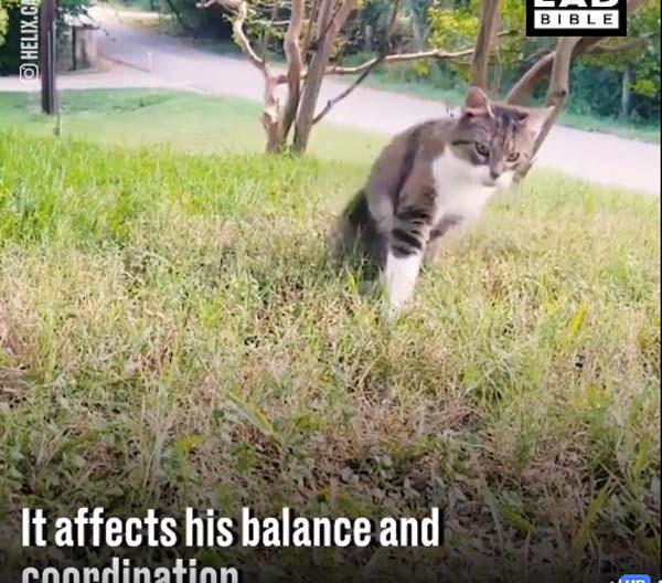 """Sự kiên trì của anh mèo """"say rượu"""" không bao giờ từ bỏ…"""