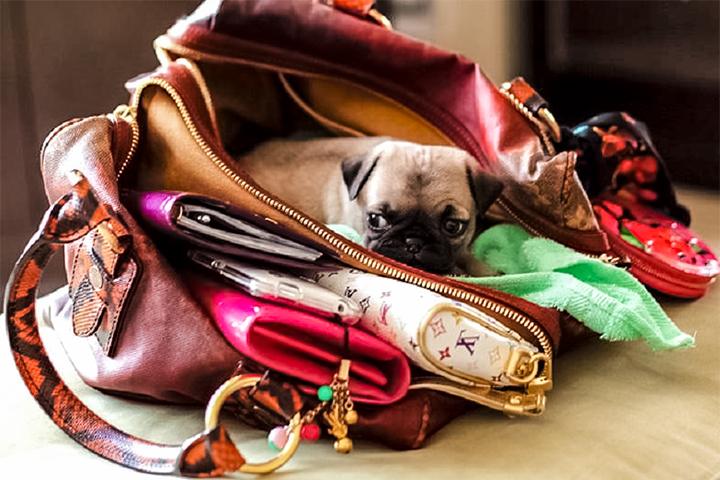 5 советов как сохранить порядок в вашей сумочке