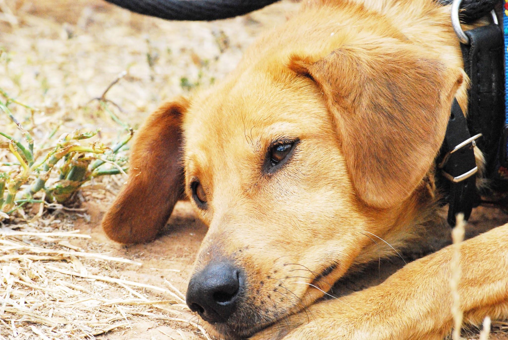 Bringing Home A Shelter Dog