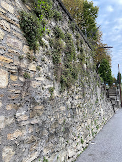 A wall in Bergamo with Pellitory of the Wall.
