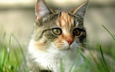 Misteri Penculikan Kucing di Austria