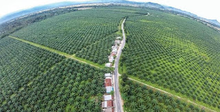Palm oil updates