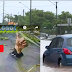 Latest News from Townsville Floods with EXTREME Video