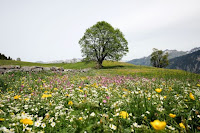 Alpine Meadow - Photo by Lukas Gächter on Unsplash