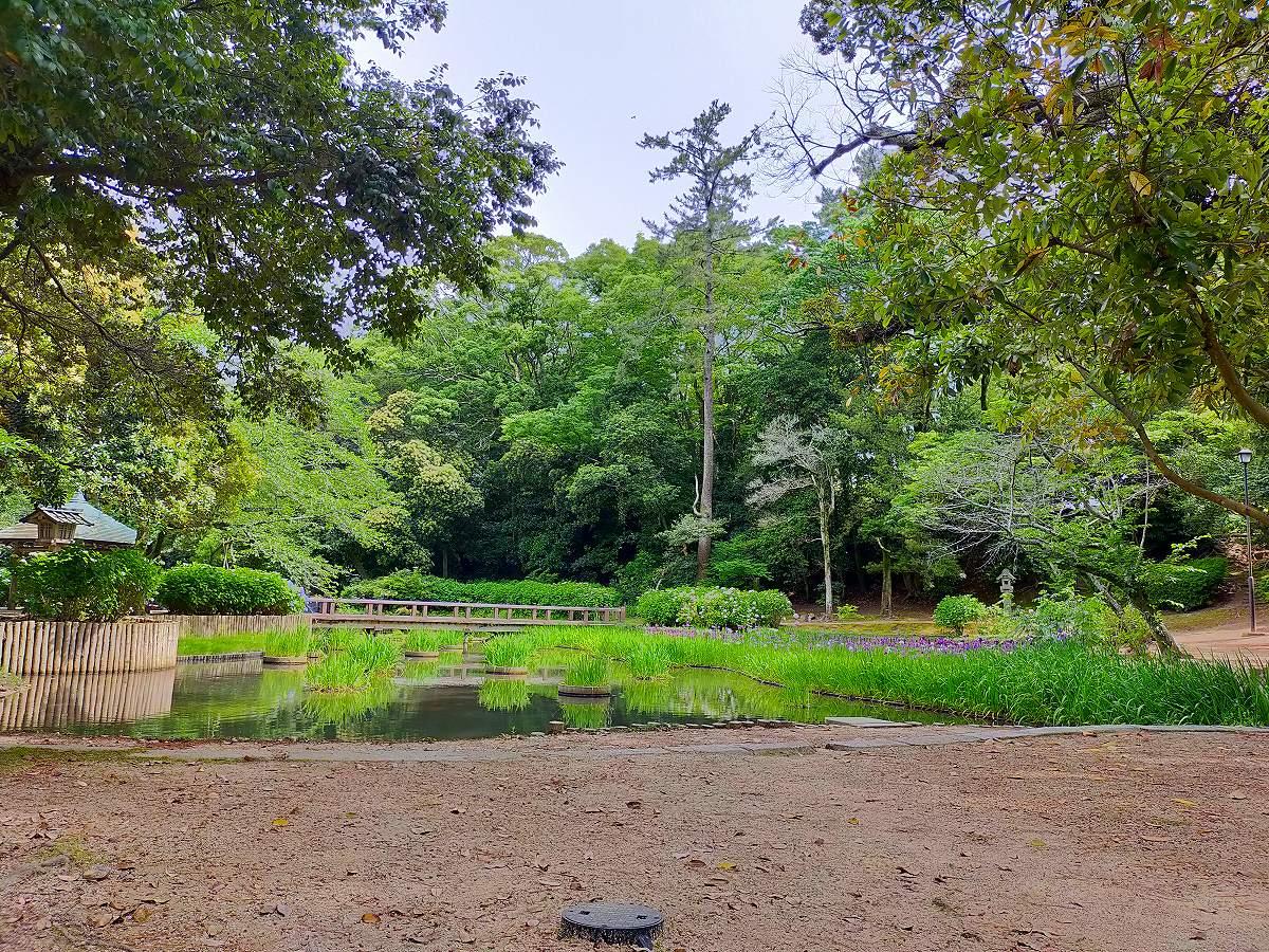 木々と池の深い緑がとても美しい。