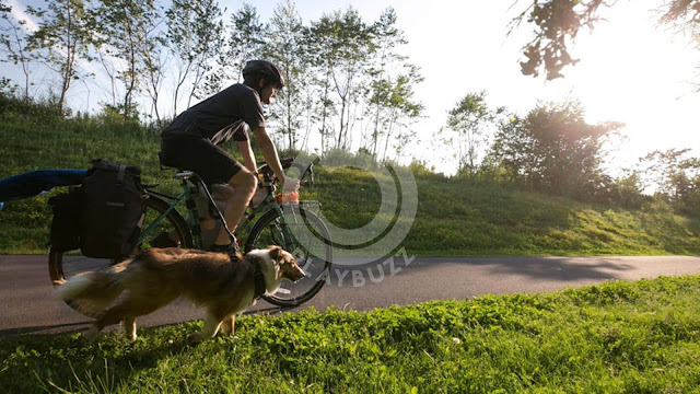 Cycling: never without my dog