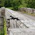 Jembatan Bunuh Diri Anjing, Anjing Sering Bunuh Diri Dari Jembatan ini, Misterius