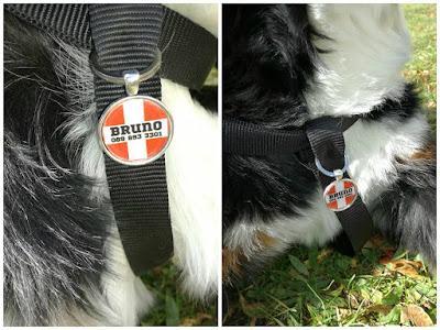 персонализиран кучешки медальон