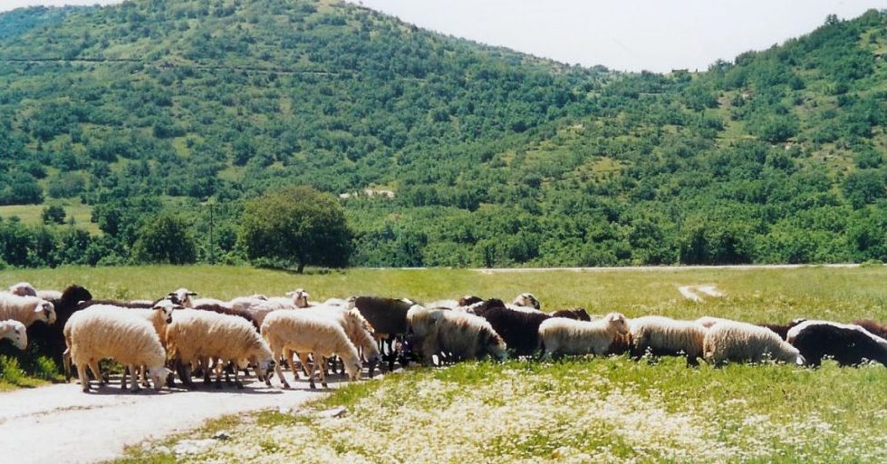 Έργα για τη μεταφορά νερού σε κτηνοτροφικές μονάδες του Δήμου Φαρκαδόνας προχωρά η Περιφέρεια Θεσσαλίας