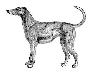 dog greyhound antique illustration digital clipart image
