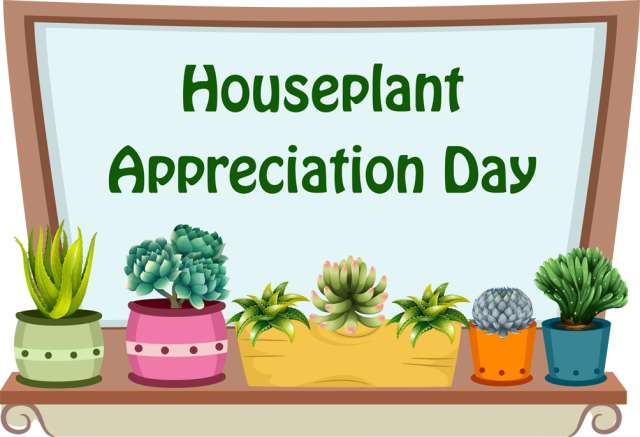 National Houseplant Appreciation Day Wishes