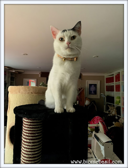 Smooch Tests The New Scratch Barrel  @BionicBasil® The Pet Parade 319