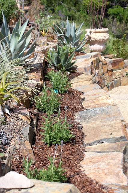 Row of lavender planted above seating wall.