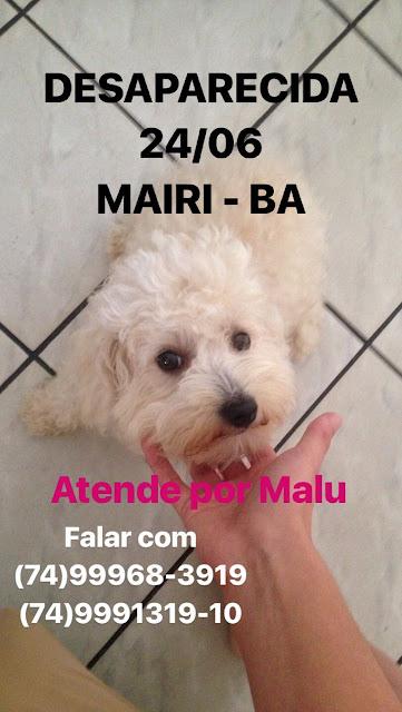 Cadelinha desaparece em Mairi