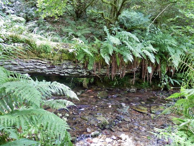 Woodland near St.Nectan's Waterfall, Cornwall