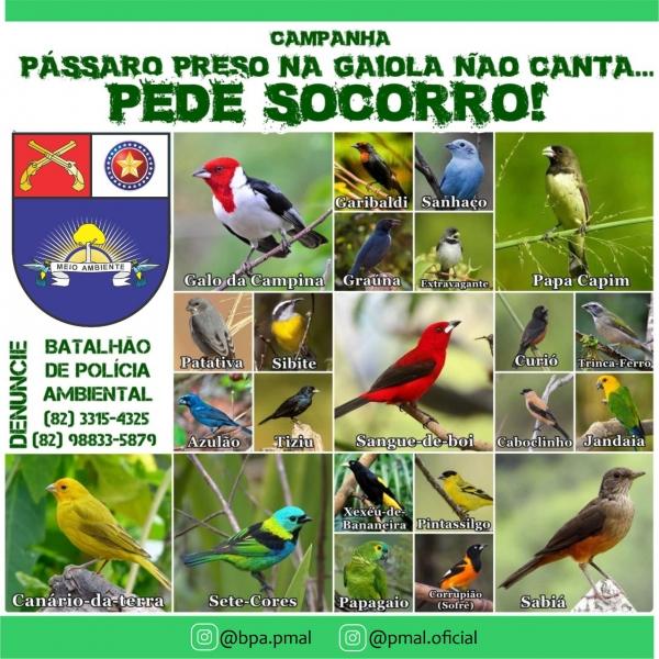 """Batalhão Ambiental de Alagoas  lança campanha """"Pássaro preso na gaiola não canta, pede socorro!"""""""