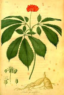 Fichas de Plantas