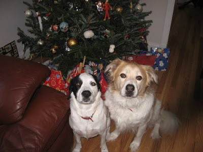 Minnie and Max, our dogs waiting for Santa and trying to behave