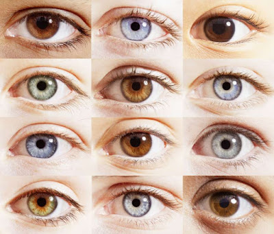 Pourquoi avons-nous des yeux de couleurs différentes