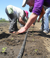 Lohnkosten Chile Stevia Anbau Vermarktung