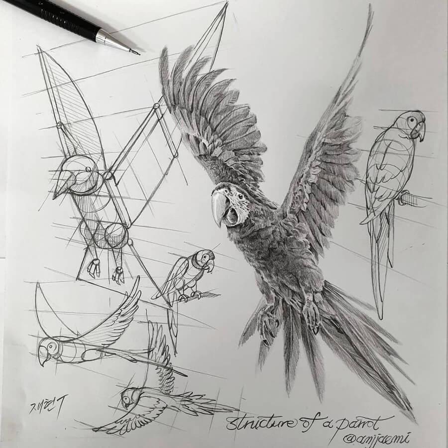 05-Flying-Parrot-anjjaemi-www-designstack-co