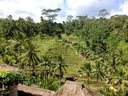 Inilah 5 Ciri Khas Iklim Tropis Di Indonesia