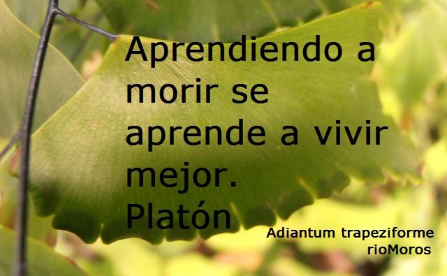 Aprendiendo a morir sea prende a vivir mejor Platón