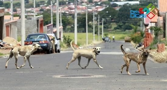 Donos de cães podem ser multados por deixar animais soltos nas ruas