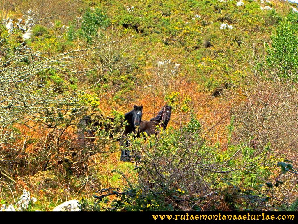 Ruta Montaña al Pienzu: Subiendo, caballos observándonos