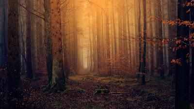 2011-Διεθνής χρονιά για τα δάση