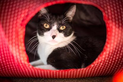 black and white cat Arthur