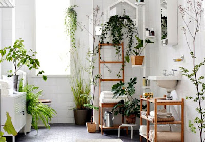 plant-ivy-bamboos-for-air-purification-at-home