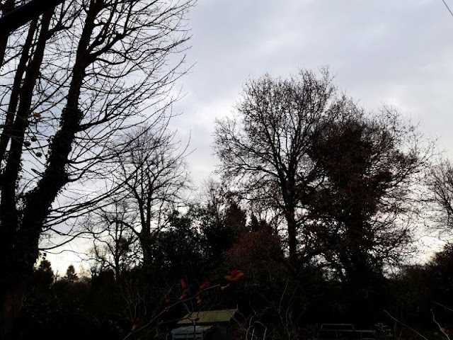 A grey cloudy sky with dark trees silhouetted against it
