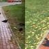 Εικόνες Αποκάλυψης στη νοτιοδυτική Σιβηρία ! Εκατοντάδες νεκρά κοράκια πέφτουν από τον ουρανό !