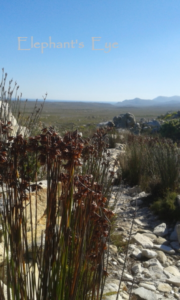 Path with restios at Cape Point