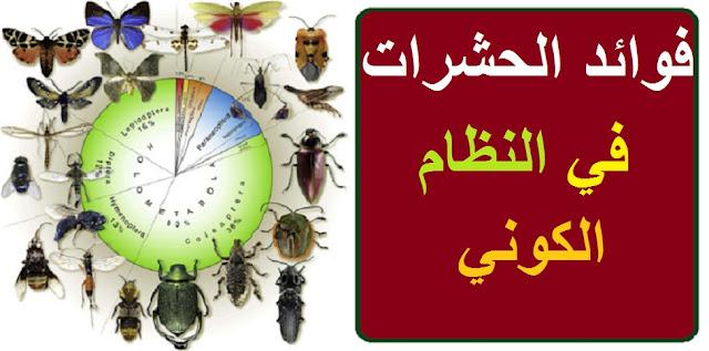 """""""الحشرات"""" """"الحشرات في الحلم"""" """"الحشرات المضيئة"""" """"الحشرات والحسد"""" """"الحشرات الطائرة"""" """"الحشرات في المنام للعزباء"""" """"الحشرات والسحر"""" """"الحشرات المنزلية"""" """"الحشرات السوداء في المنام"""" """"الحشرات الطائرة في المنام"""" """"الحشرات الطائرة في المنزل"""" """"الحشرات المضيئة في ماليزيا"""" """"الحشرات القشرية"""" """"حشرة bed bug"""" """"حشرة botfly"""" """"حشرة bug"""" """"حشرة booklice"""" """"حشرة bee"""" """"bed bug حشرات"""" """"الحشرات ب الانجليزي"""" """"الحشرات بانواعها"""" """"الحشرات control"""" """"حشرة cochineal"""" """"حشرة cicada"""" """"حشرة cricket"""" """"حشرة coccinelle"""" """"حشرة cochenille"""" """"حشرة cimex lectularius"""" """"حشرة crane fly"""" """"حشرة demodex"""" """"حشرة drain fly"""" """"مبيد الحشرات d6"""" """"مبيد الحشرات ddt"""" """"مكافحة الحشرات doha"""" """"مكافحة الحشرات doc"""" """"علم الحشرات doc"""" """"بحث عن الحشرات doc"""" """"الحشرات en français"""" """"الحشرات en arabe"""" """"حشرة earwig"""" """"حشرة e120"""" """"حشرات en francais"""" """"حشرات english"""" """"حشرة en français"""" """"حشرات english translation"""" """"الحشرات français"""" """"حشرة firebrat"""" """"حشرة fleas"""" """"حشرة francais"""" """"حشرات français"""" """"حشرة fly"""" """"حشرة flies"""" """"fl الحشرات"""" """"حشرة grain mites"""" """"حشرة gypsy moth"""" """"حشرات google"""" """"حشرات gnat"""" """"حشرة house centipede"""" """"حشرات hemiptera"""" """"حشرات hexapoda"""" """"حشرات in english"""" """"حشرة in english"""" """"حشرة insectes"""" """"مكافحة الحشرات in english"""" """"الحشرات meaning in english"""" """"الحشرات الالكترونية"""" """"حشرة kene"""" """"مبيد الحشرات k-othrine"""" """"مبيد الحشرات k300"""" """"حشرة lone star tick"""" """"حشرة ladybug"""" """"حشرة lacewing"""" """"حشرة lac"""" """"الحشرات ل"""" """"الحشرات lebanon"""" """"حشرات lyrics"""" """"حشرة leafhopper"""" """"حشرة mayfly"""" """"حشرة mites"""" """"حشرة moth"""" """"حشرات meaning"""" """"حشرات means in english"""" """"حشرة mante"""" """"من الحشرات"""" """"مبيد الحشرات novan"""" """"حشرة ne demek"""" """"الحشرات ا"""" """"مبيد الحشرات oro"""" """"الحشرات pdf"""" """"الحشرات ppt"""" """"الحشرات photo"""" """"حشرات png"""" """"الحشرات ب"""" """"علم الحشرات pdf"""" """"الحشرات القاتله"""" """"الحشرات والطاقة"""" """"الحشرات اللادغة"""" """"مبيد الحشرات red"""" """"جهاز طارد الحشرات riddex"""" """"حشرة silverfish"""" """"حشرة scabies"""" """"حشرة sand fly"""" """"حشرة spodoptera"""" """"حشرة spider"""" """"مبيد الحشرات stop"""" """"حشرة stick insects"""" """"الحشرات traduction français"""" """"حشرة tick"""" """"حشرة thrips"""" """"حشرة tuta absoluta"""" """"حشرة tree hooper"""" """"حشرة translate"""" """"حشر"""