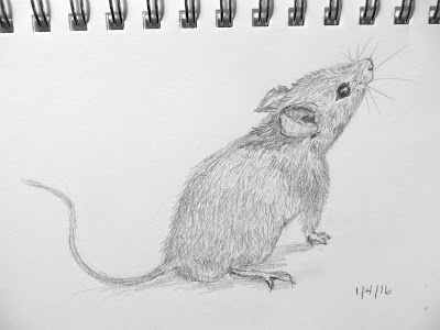 Setting Goals for 2016: Revising Text & Illustrations/The Mouse Project