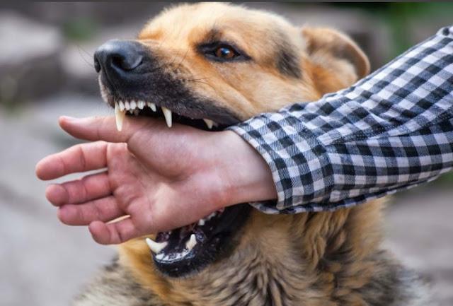 ماهي الأمراض التي تنتقل عن طريق الحيوانات