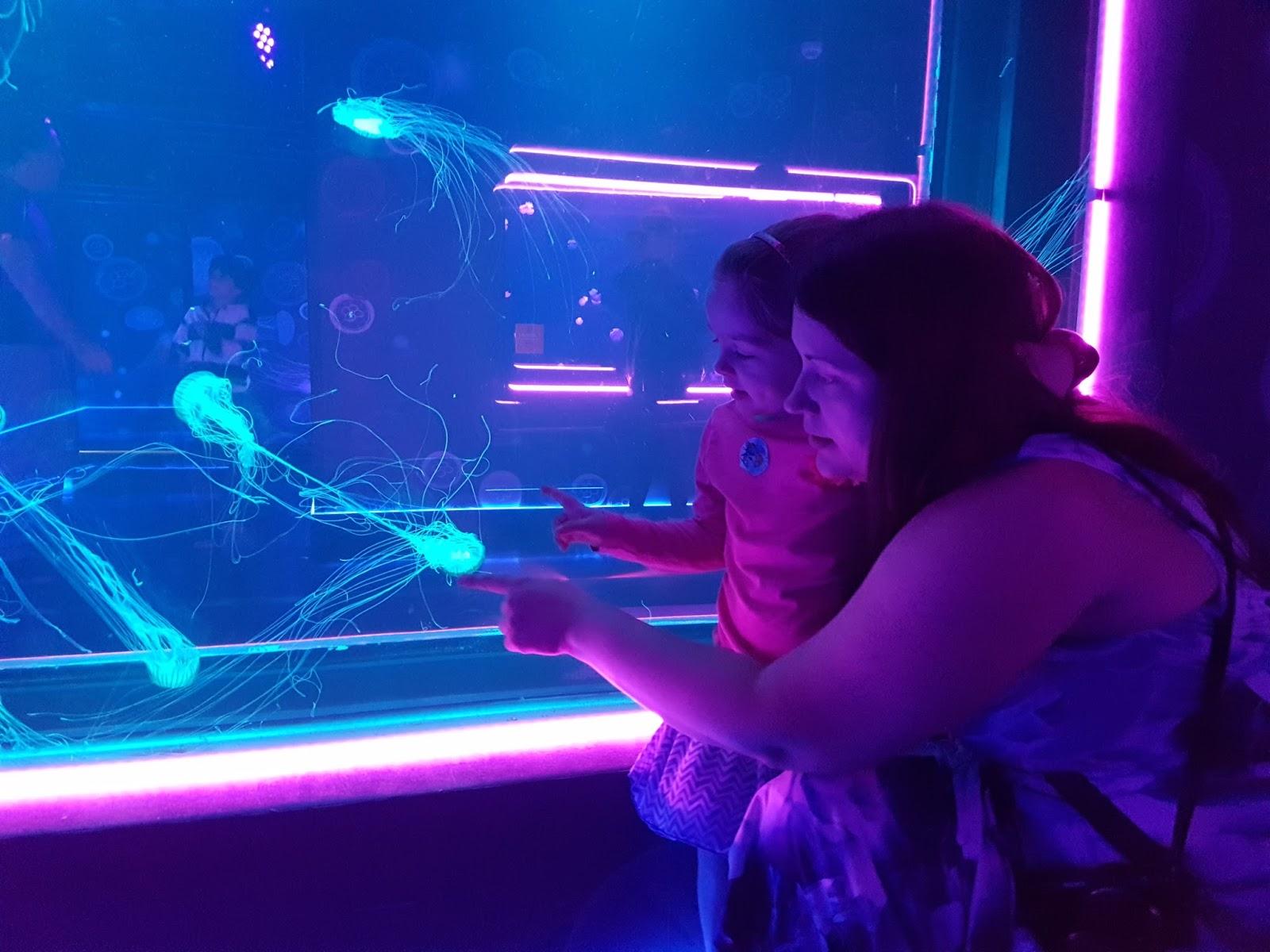 mum pointing at jellyfish