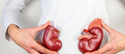 Sëmundjet kronike të veshkave, Veshkat,Nefroni , Nefrologjia, Insuficienca e veshkave