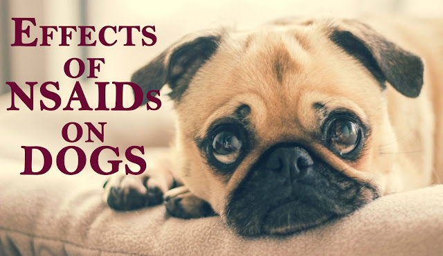Effect of NSAIDs on dogs